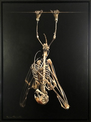 website Marcotte, Maria (Birmingham) - Fruit Bat Skeleton